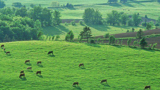 Hạn mức chuyển mục đích sử dụng đất nông nghiệp sang đất ở mới nhất – Luật 24H