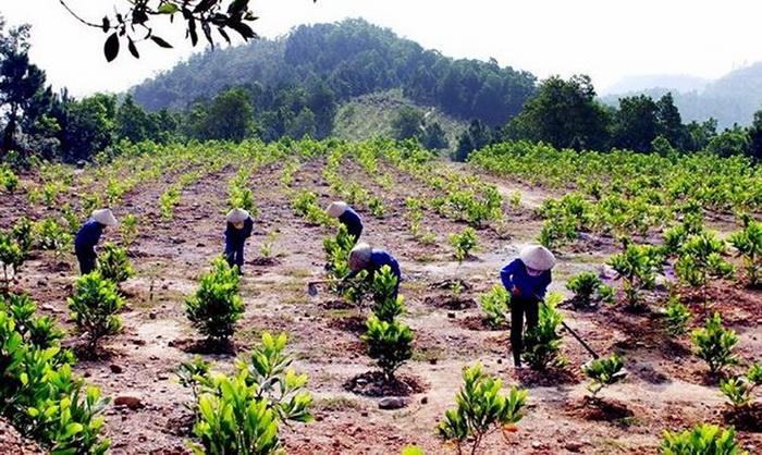 Đất trồng rừng có chuyển đổi sang đất ở được không – Luật 24H