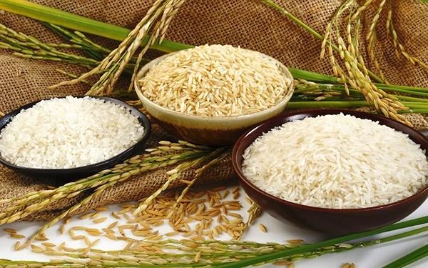Thủ tục nhập khẩu gạo và xuất khẩu gạo – Luật 24h