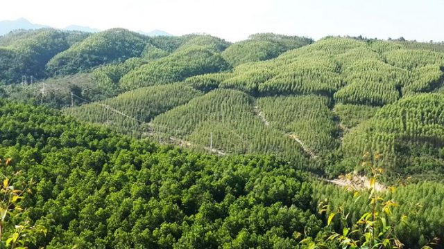 Được giao đất trồng rừng có được làm sổ đỏ không? – Luật 24h