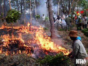 Truy cứu trách nhiệm hình sự hành vi đốt rừng làm nương